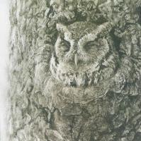 Screech Owl in Apple Tree