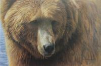 Grizzly Head Portrait