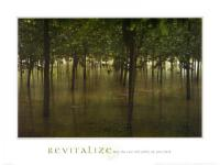 Revitalize - Forest