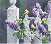 Summer Lilacs - Gold Finch