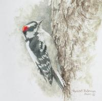 Downy Woodpecker Study w/book