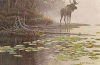Moose At Water's Edge