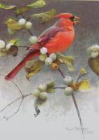 Cardinal and Snowberries
