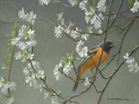 Baltimore Oriole & Plum Blossoms