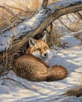 Restful Moment - Red Fox