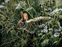Awakening Meadow-Cottontail