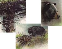 Black Bear Predator Portrait - set of three