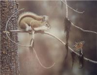 Encounter Session - Red Squirrel and Painted Lady
