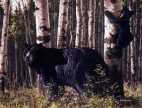 Aspen Retreat - Black Bear