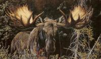 Close Encounter: Alaska Moose
