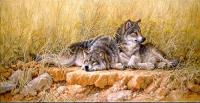 End of Summer: Gray Wolves