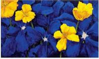 Big Yellow Flowers, Blue Background