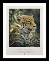 Spotted Jaguar - Symbol of the Rainforest
