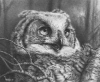 Juvenile Great Horned Owl Study