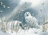 On the North Wind - Snowy Owl