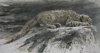 Reclining Snow Leopard