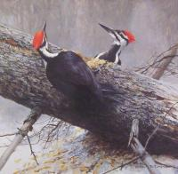 Woodworkers - Pileated Woodpeckers