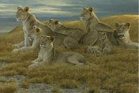 Family Gathering - Lioness and Cubs